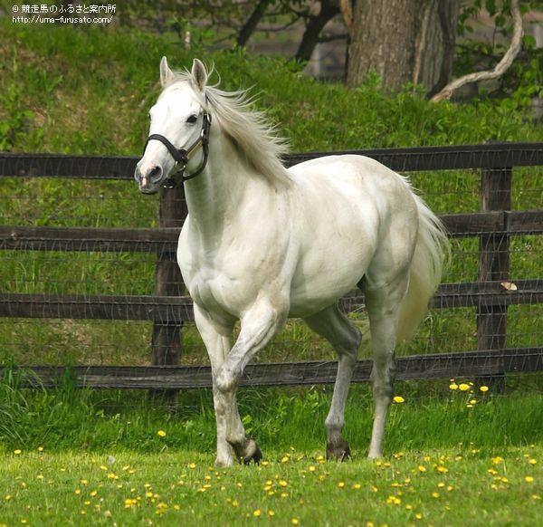 アドマイヤコジーンを訪ねて~社台スタリオンステーション   馬産地 ...