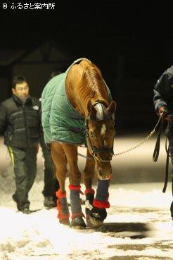 日本軽種馬協会静内種馬場に到着したロドリゴデトリアーノ