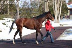 マイネルコロンブスとの馬名が付けられた、トウホクビジンの2017(牡)