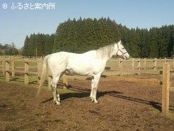 半弟にエイシンヒカリがいる良血馬(写真提供:吉野牧場)