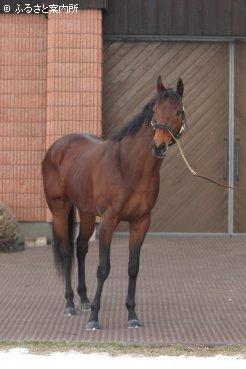 2013年度JRA賞年度代表馬&最優秀短距離馬を受賞