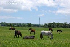 新生ファームの放牧地