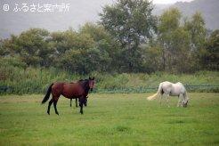 坂東牧場の放牧地(手前の鹿毛馬はデルマルーヴルの母カリビアンロマンス)