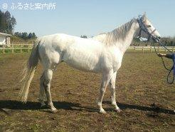 種牡馬入りが発表されたエーシンシャラク(写真提供:吉野牧場)
