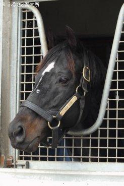 種牡馬を引退したヴァーミリアン