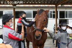 生徒の助けを借りて馬の手入れをした
