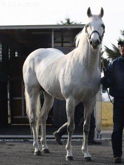 申し分のない種牡馬実績。関係者の期待は大きい。