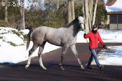 スペースシップとの馬名が付けられた、ジャズプリンセスの2017(牡)