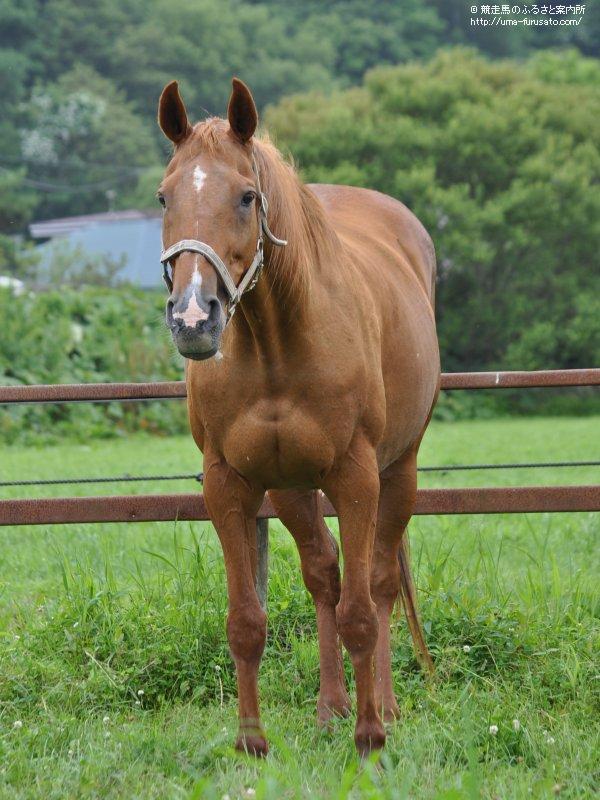 イクノディクタスを訪ねて~五丸農場 | 馬産地コラム | 競走馬の ...