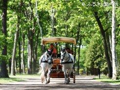 立候補馬で普段は馬車を引いているヴィーネ&ロッテ