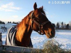冬季は馬服を着せて放牧している