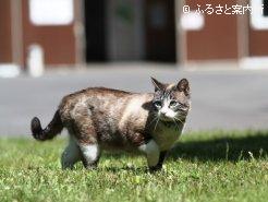 厩舎の癒し系猫・ルルも立候補