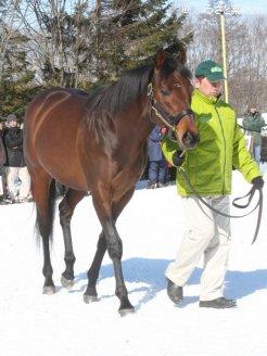 今シーズンは266頭に種付け。まさに記録尽くめの2010年となった(2010年種牡馬展示会時撮影)