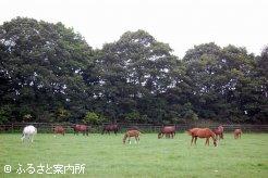 今年生まれた当歳馬と母馬が昼夜放牧されている放牧地