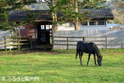 自由に出入りできる馬房と放牧地