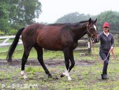 25歳となり、牧場では「じいちゃん」と呼ばれています