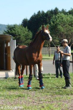 日本軽種馬協会静内種馬場に戻ってきたイシノサンデー