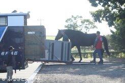 来年からは浦河町のイーストスタッドで種牡馬生活を続ける
