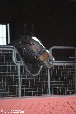 新たな住まいからの景色を楽しむ1998年ダービー馬