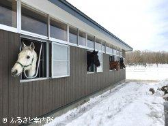 新厩舎に入厩し、オープンに向けて英気を養う準備万端の乗馬クラブ所属馬