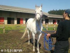 九州のタイキシャトル後継種牡馬として期待している(写真提供:吉野牧場)