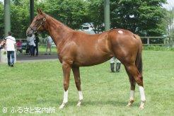 5,390,000円(税込)のトーセンホマレボシ産駒は牝馬の最高価格だった