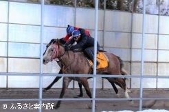 登録馬名コスモジェミラこと、シーギリヤガールの2017(牝)は、仕掛けられた時の反応の良さで、一気に併せ馬をした古馬を交わしていく