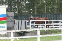馬運車に積み込まれるデビッドジュニア