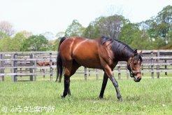 ステイゴールドの後継種牡馬として期待は大きい