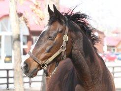 ウインドインハーヘアら園内展示馬もフォトコンテストのテーマ対象