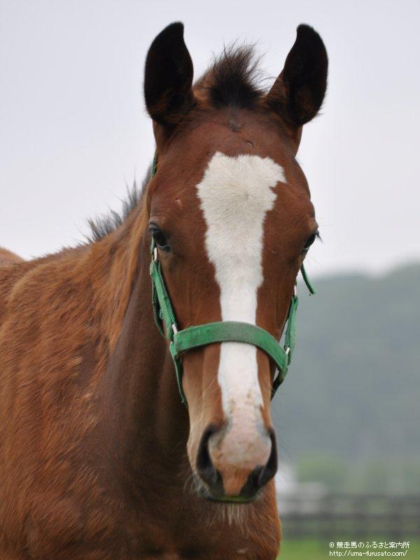 テイエムオーシャンに5番仔が誕生 | 馬産地ニュース | 競走馬の ...