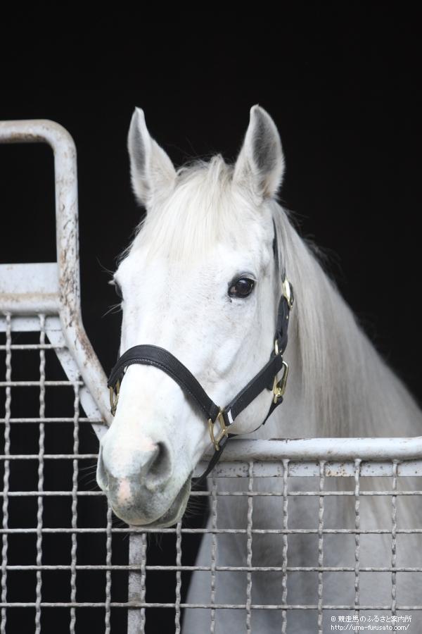 アドマイヤコジーンが種牡馬引退   馬産地ニュース   競走馬のふるさと ...
