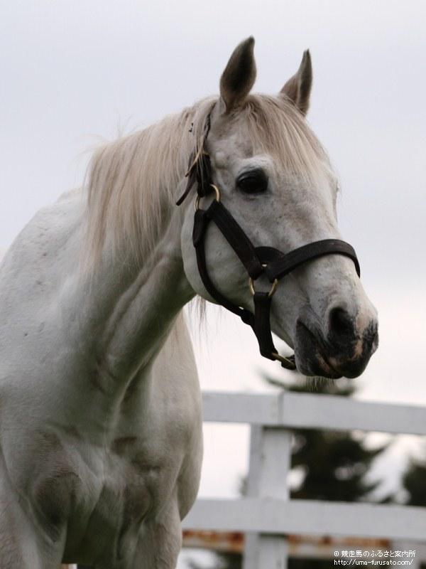 アドマイヤコジーンを訪ねて~レックススタッド   馬産地コラム   競走 ...