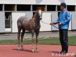 初仔にしては比較的大きい馬体です