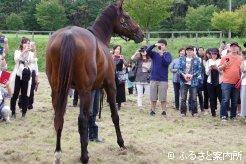 2016年に行われたウインバリアシオンお披露目会