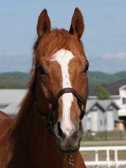立候補馬の一頭、G1馬アドマイヤジュピタ