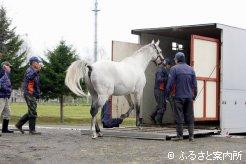 馬運車に乗り込むヒシミラクル