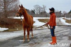 若々しい馬体と表情
