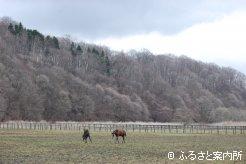城地牧場の放牧地