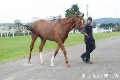 母ビワハイジは5頭の重賞勝ち馬を輩出。半弟アドマイヤオーラ共々の活躍が期待されている