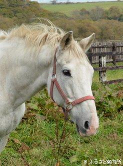 ビワハヤヒデ   馬・牧場・施設検索   競走馬のふるさと案内所