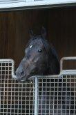 さっそく馬房でリラックスする第80代日本ダービー馬