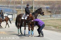 ビデオ撮影を終え検査用の採血場所へ向かう上場予定馬