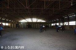 屋内馬場で準備運動する上場予定馬
