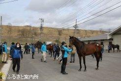日高育成牧場で開催された育成馬展示会