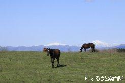 写真1 [山が背景]