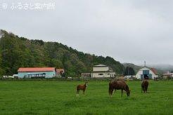 佐藤静子牧場の放牧地