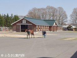 放牧から帰ってくる育成馬たち
