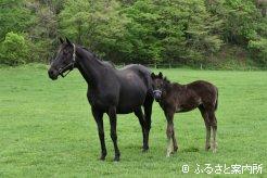 トゥルスウィーの母ブラックウィッチと今年生まれた当歳馬