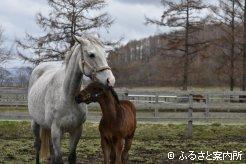 パールプレミアの母アルマエルモ(9歳)と今年生まれた当歳馬